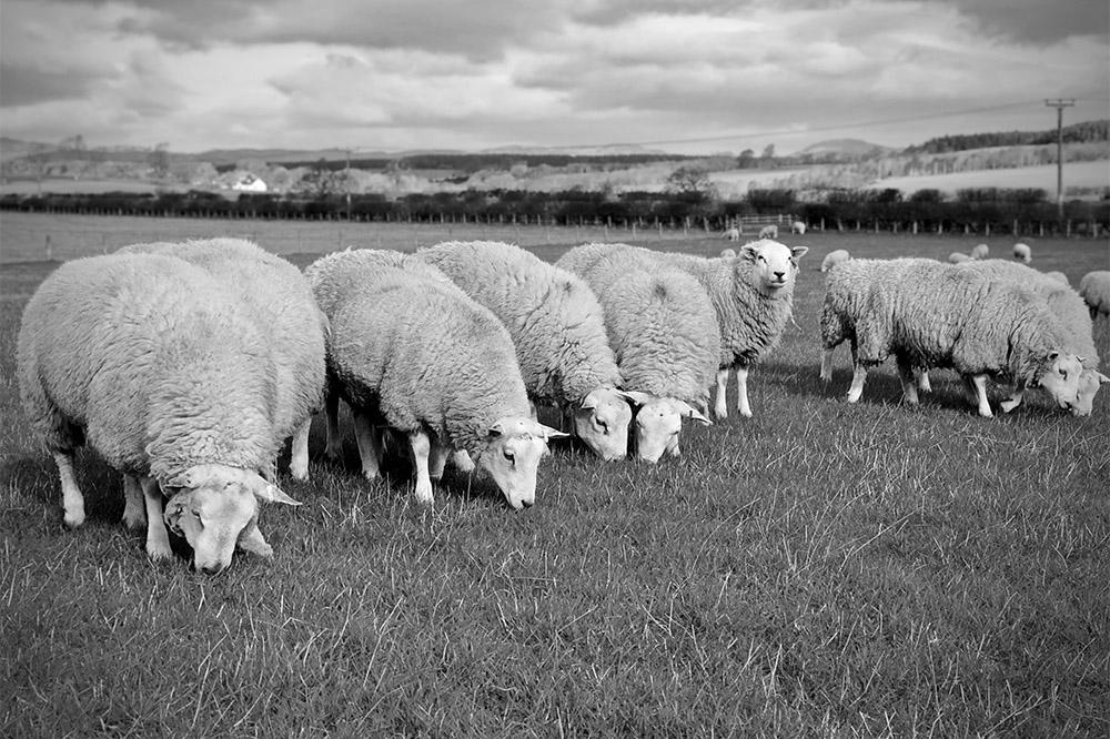 Forrit Farming consultancy